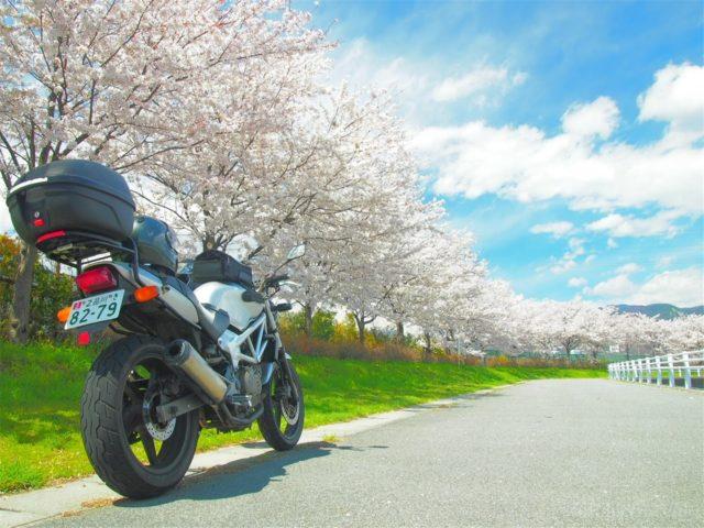 VTR250で桜探しツーリング