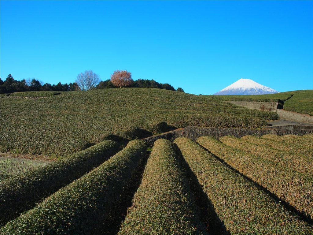 大淵笹場から見る富士山2