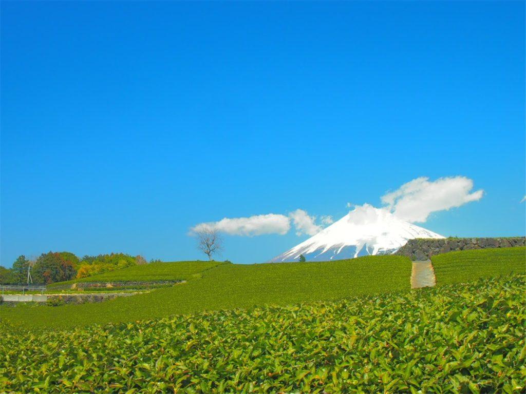 今宮の茶畑と富士山