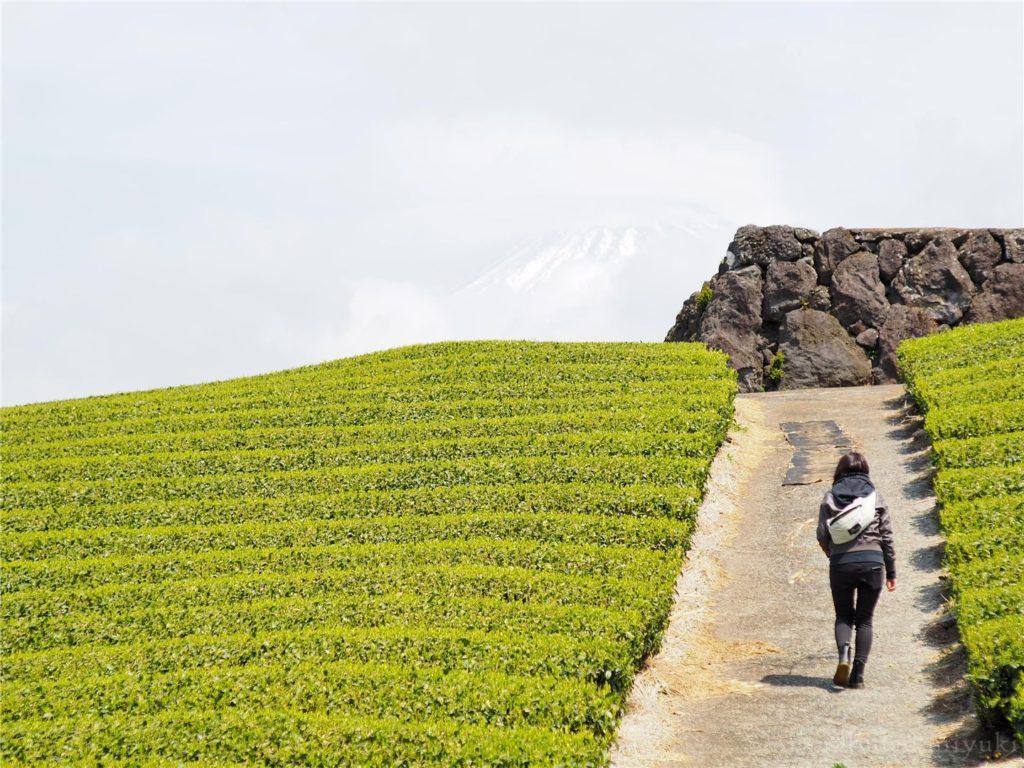 茶畑と富士山?と妹。