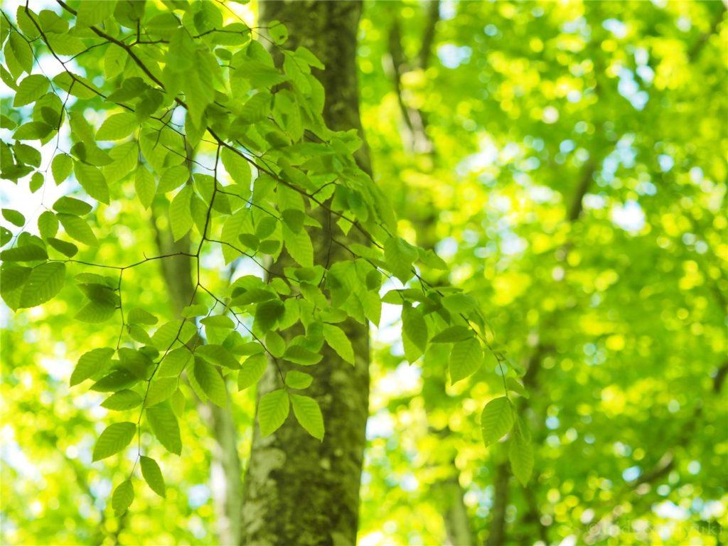 緑の季節が始まっていました