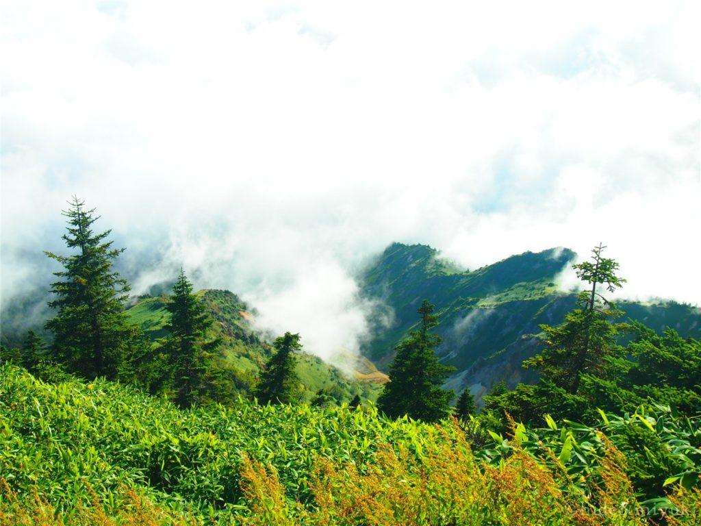 リフトで登り切った先は雲の上でした。